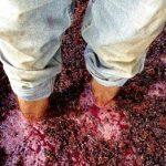 Wine Tasting – Red Wine