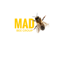 mansfield bee group